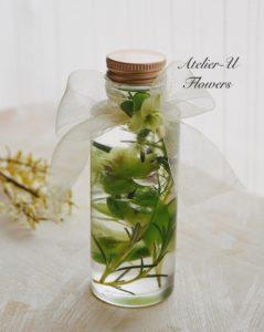 harbarium-herb