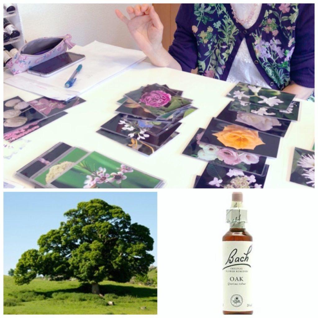 flower-essence-oak