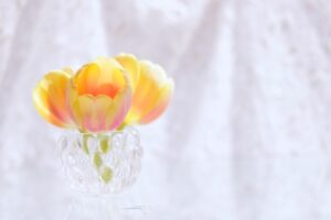 freshflower2